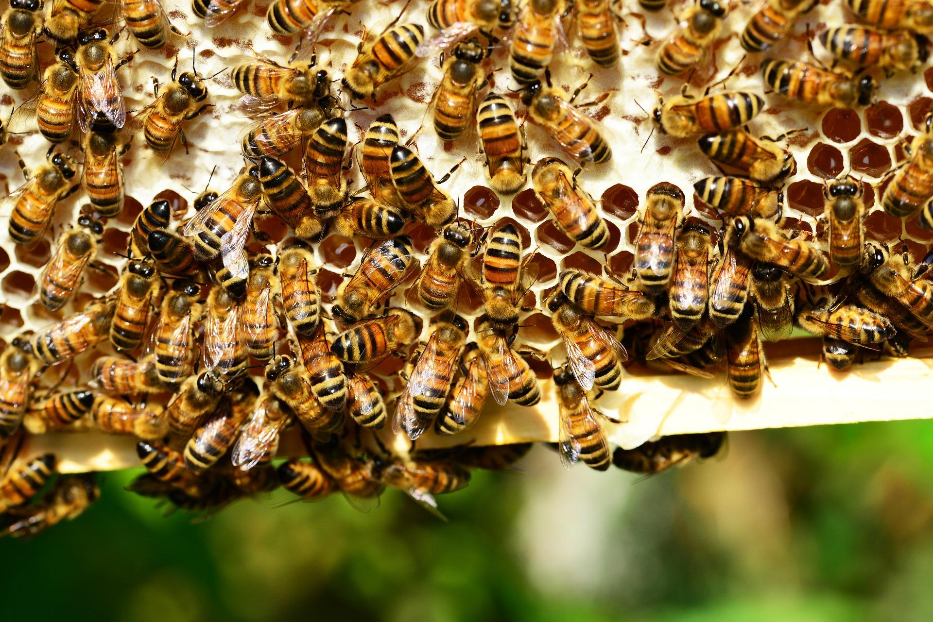 apicoltura genova